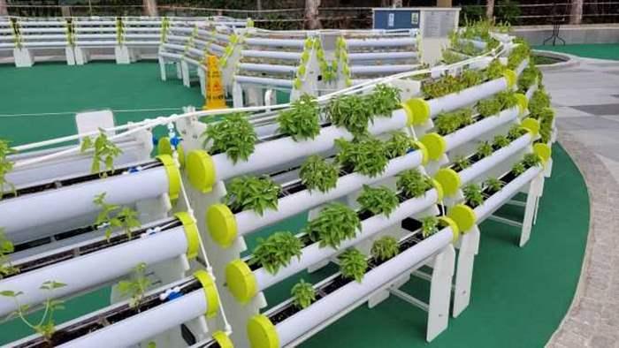 公眾可以以水耕或有機形式感受種植的樂趣